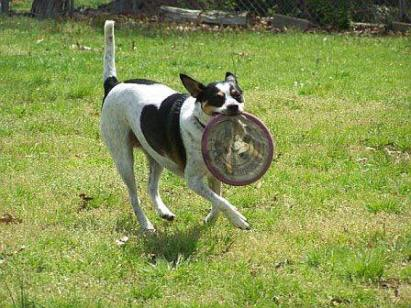 Athena frisbee